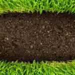 Entering the World of Organic Lawn Care