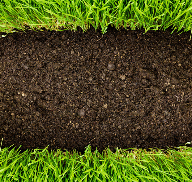 Soil and green turf