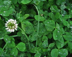 How to Manage the Top Six Most Frustrating Weeds