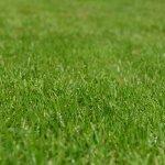 Teddy's Tips: Keep Your Lawn Care Company Environmentally Conscious