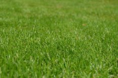 Teddy's Tips: Keep Your Lawn Care Company Environmentally Conscious