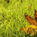 Teddy's Tips: Cool Season Grass