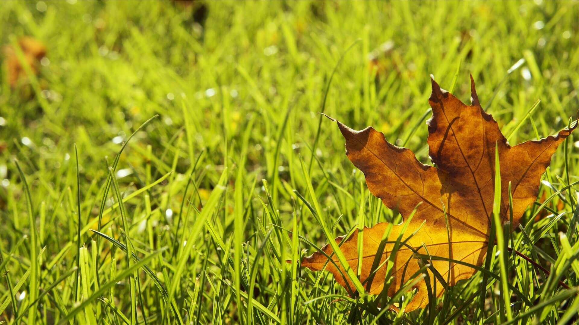 Fall leaf on grass.