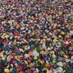 TEDDY'S TIPS: Best Practices for Lawn Care Operators This Fall